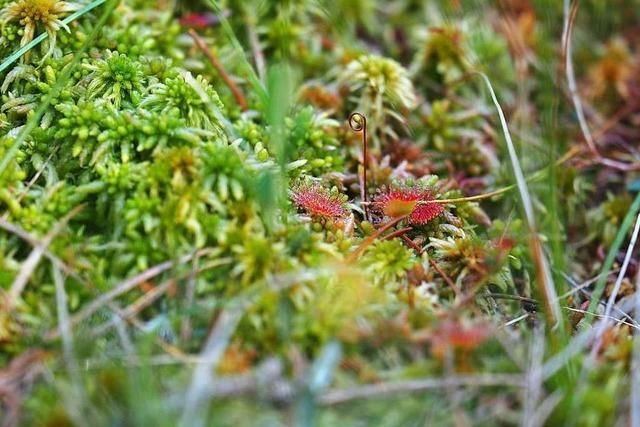 Wie das Moor im Eschengrundmoos vorm Austrocknen bewahrt wird