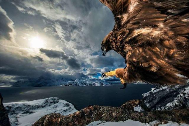 Das Naturhistorische Museum zeigt die besten Naturbilder des Jahres