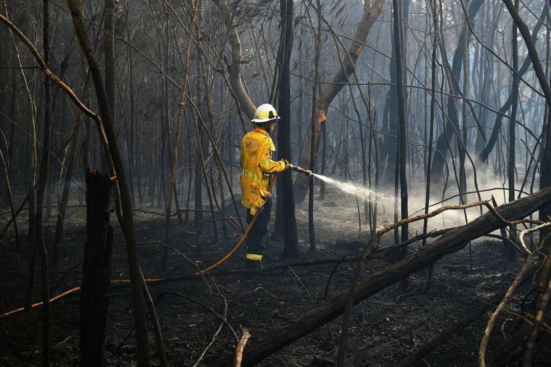 Buschfeuer in Australien  | Foto: Dan Himbrechts (dpa)