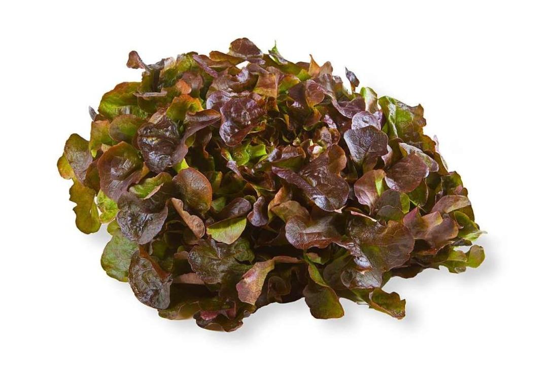 Die Blätter des Eichblattsalats ähneln denen einer Eiche.    Foto: Birgit Reitz-Hofmann