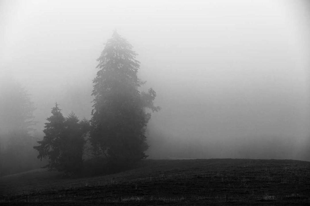 Die Seniorin wurde bei einem Waldgebiet gefunden. (Symbolbild)  | Foto: Carlotta Huber