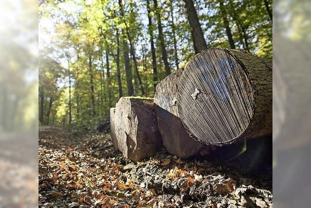 Gut für den Geldbeutel, schlecht für den Wald