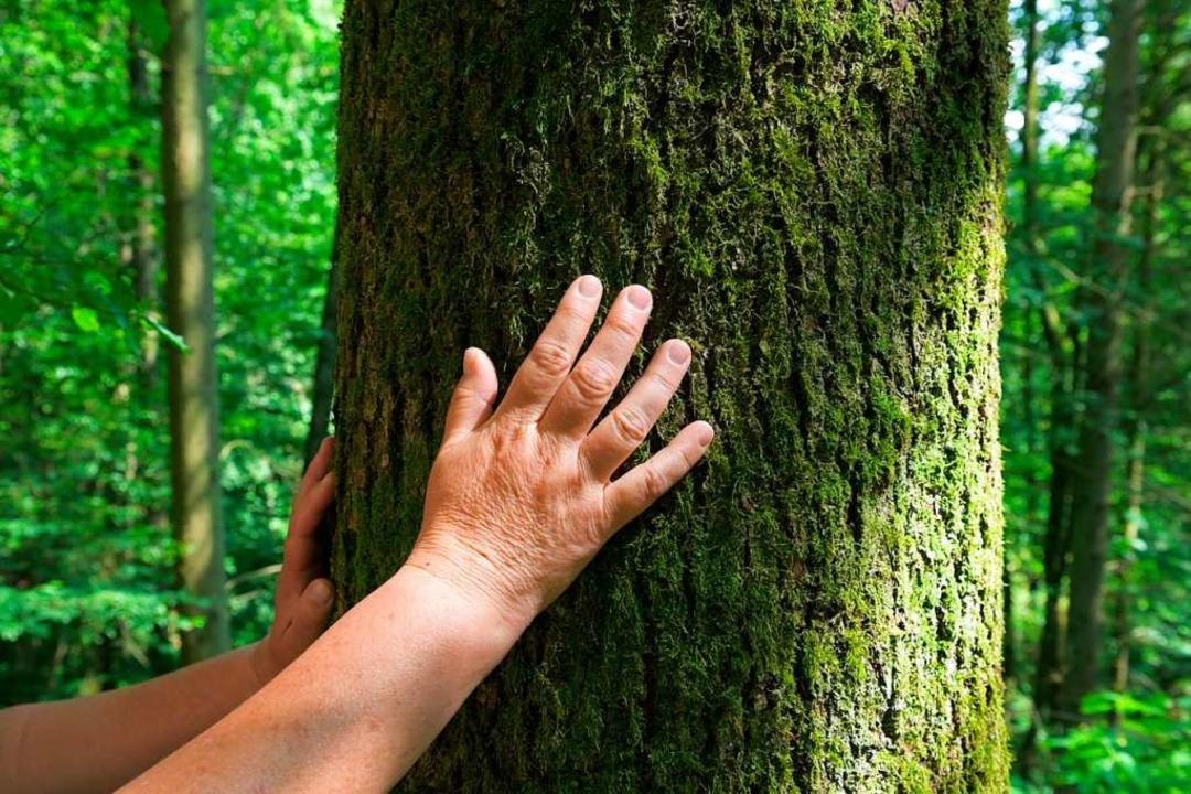 Fühl doch mal: Die Natur mit allen Sinnen begreifen.  | Foto: Silas Stein