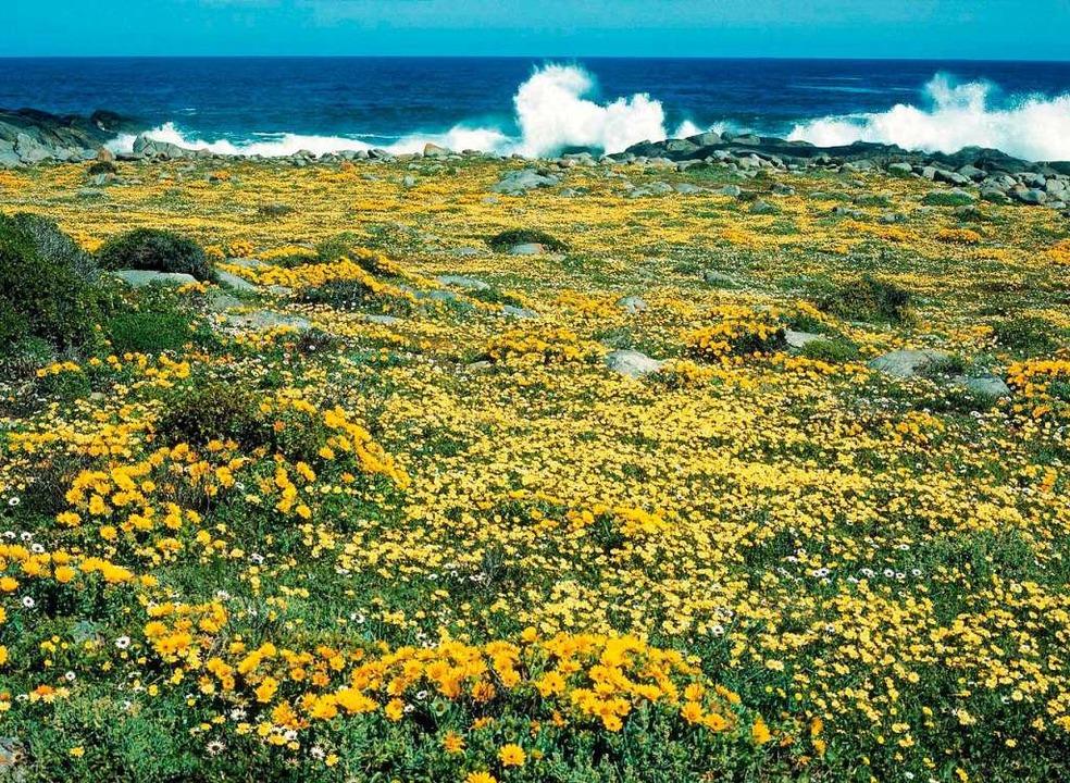 Bunte Pracht:  Blühende Fynbos-Landschaft im West Coast National Park  | Foto: www.southafrica.net