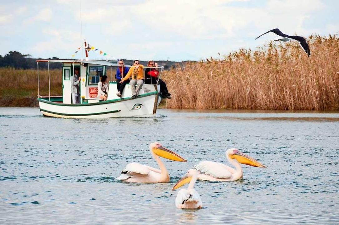 Naturparadies: Vor allem Hobby-Ornithologen und Angler zieht es nach Velddrif.  | Foto: Velddrif Tourism
