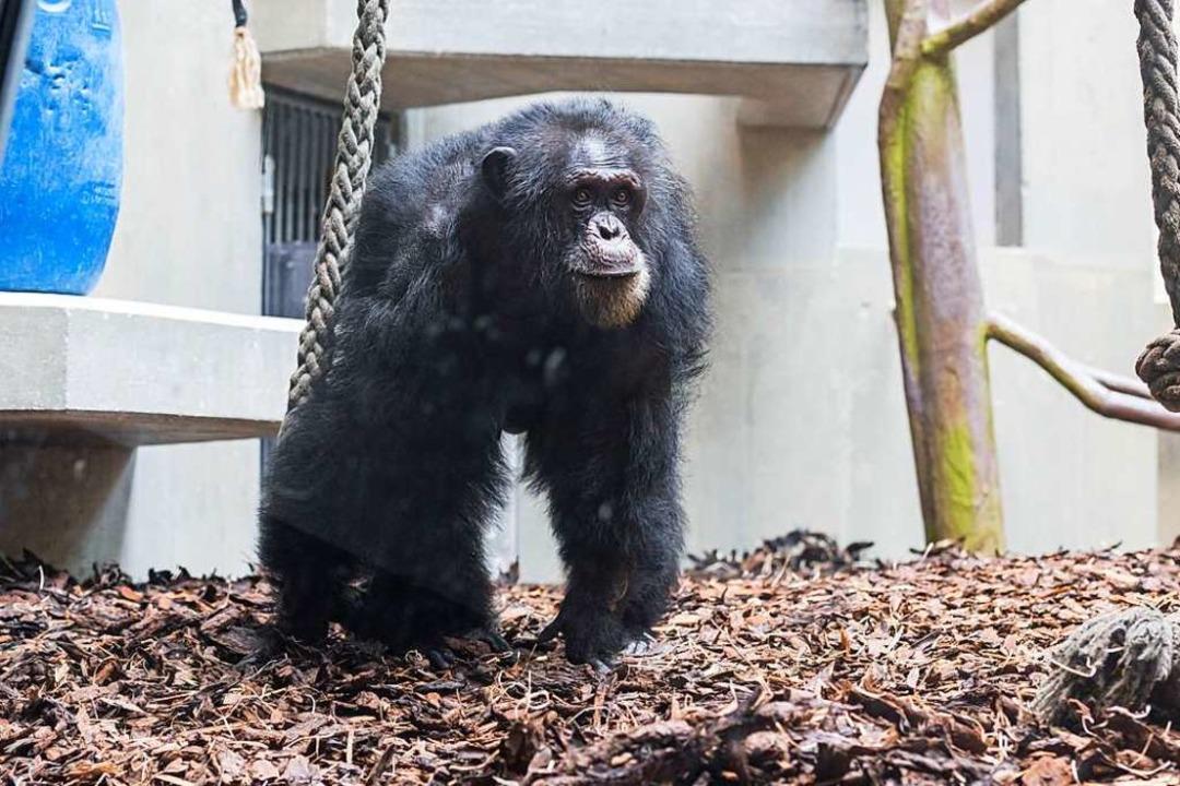   Foto: Zoo Basel (Torben Weber)