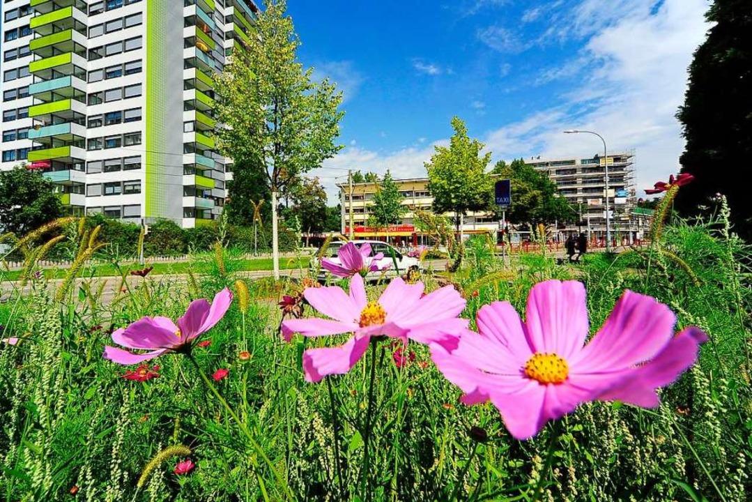 Eine Wildblumenwiese in Weingarten (Archivbild).    Foto: Thomas Kunz