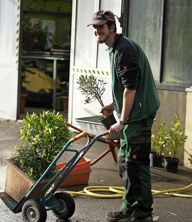 Martin Feldmann, Mitarbeiter der Stadt... die Topfpflanzen ins Winterquartier.   | Foto:  Verena Wehrle