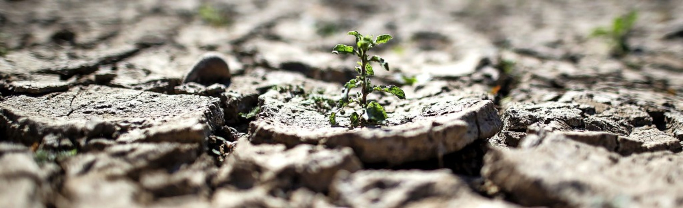 Auch im Schwarzwald nehmen trockene Pe... anderem extrem ausgetrocknete Böden.   | Foto: Federico Gambarini (dpa)