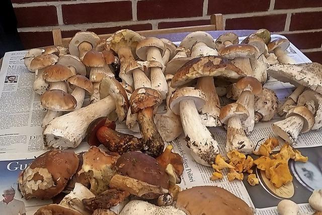 Sammler waren im Pilzrausch