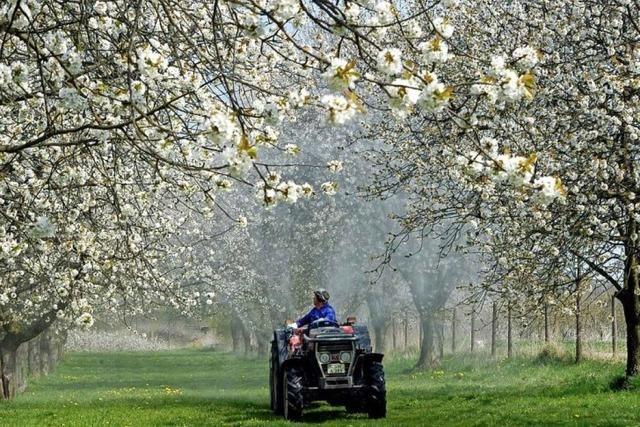 Obstbauern unter Kostendruck