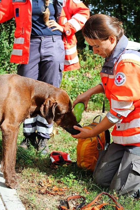 Arbeiten macht durstig: eine kleine Pa...inen Hund des Deutschen Roten Kreuzes.    Foto: Annika Sindlinger