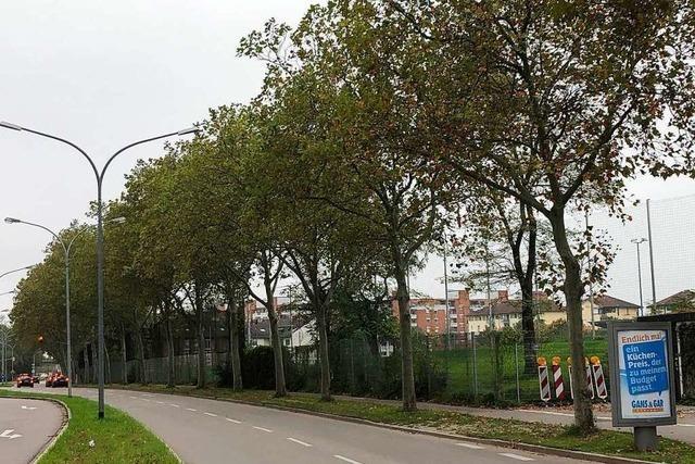 Von der Absage der Baumfällungen geht ein fatales Signal aus