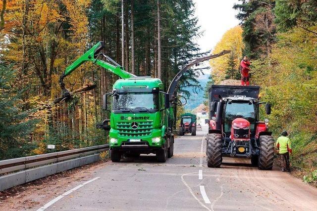 Baumfällarbeiten an Schönberg-Strecke erfolgreich beendet
