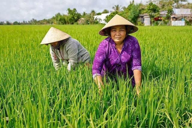 Mit Mangroven in Vietnam gegen den Klimawandel