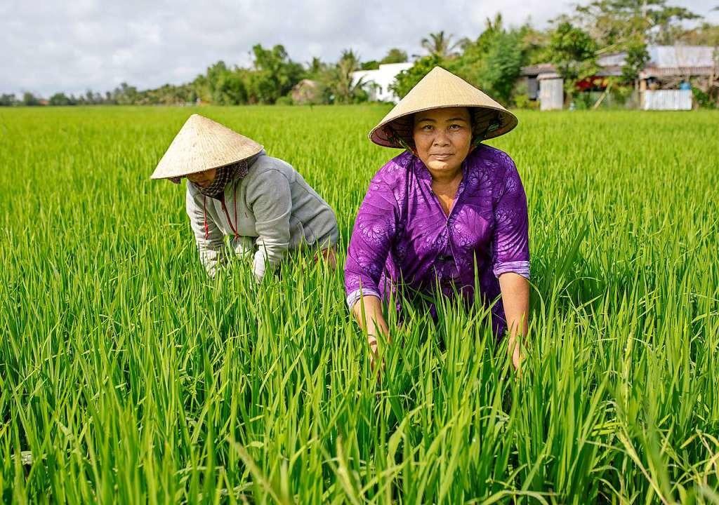 Vietnam ist zweitgrößter Reis-Exporteur der Welt.  | Foto: Thomas Imo/photothek.net/GIZ