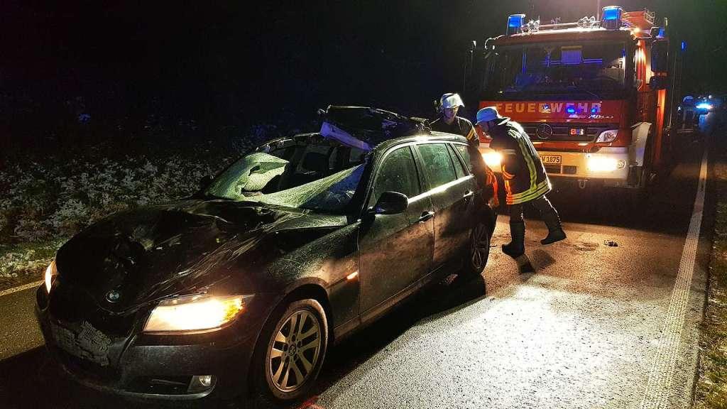 Autofahrer rammt Jungkuh in der Dunkelheit - Titisee-Neustadt - Badische Zeitung