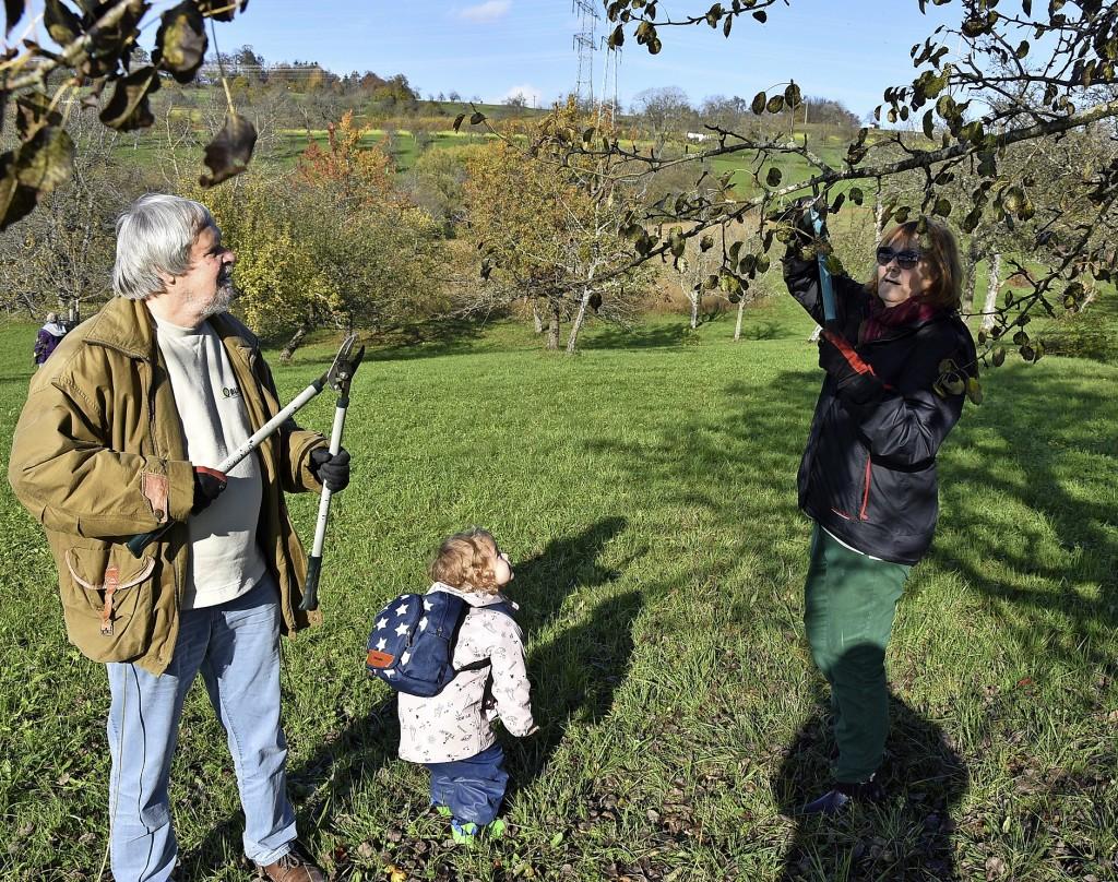 Apfelbäume profitieren von Mikroklima - Rheinfelden - Badische Zeitung