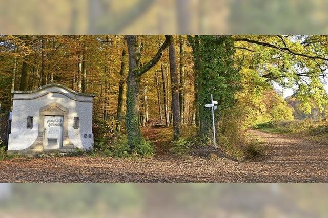 Wald wird vom Glücks- zum Sorgenkind