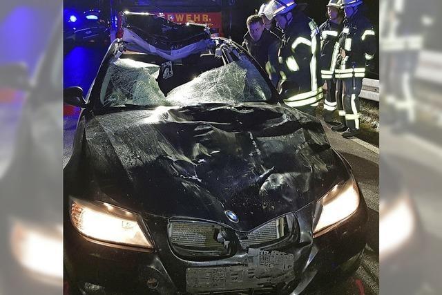 Fahrer schwer verletzt, Kuh lebt