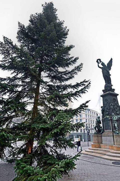 Der Baum am Europaplatz ist 17 Meter hoch.  | Foto: Michael Bamberger