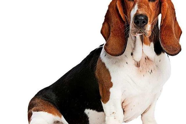 Wiedener sind besorgt wegen Hundezucht im Ort