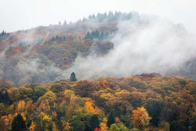 Trübes Herbstwetter bis zum Wochenende – dann heiter