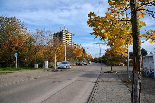 Bäume im Offenburger Stadtgebiet leiden unter Klimafolgen