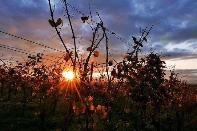 Goldener Herbst am Tuniberg
