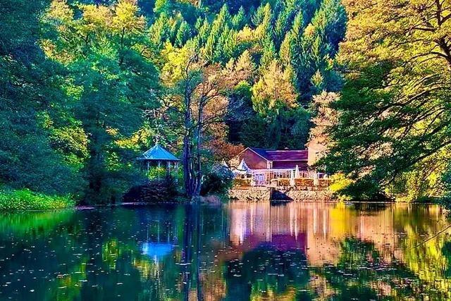 Am Waldsee spiegeln sich die Bäume
