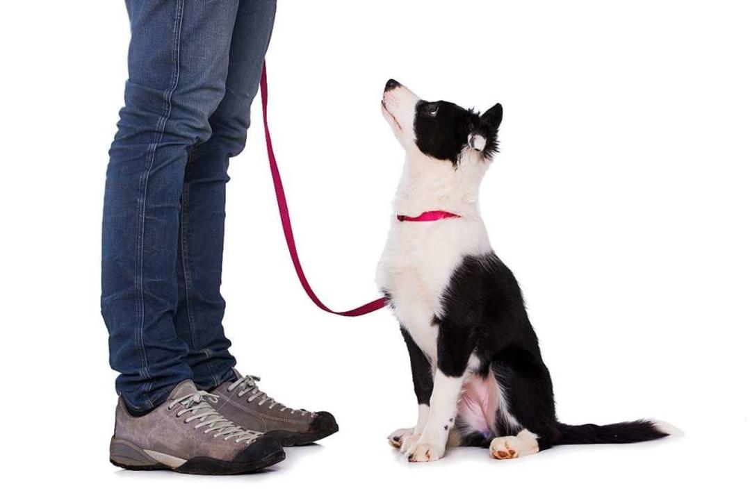 Wer einen Hundeführerschein ablegt, le...igenheiten seines Haustiers umzugehen.  | Foto: DoraZett - stock.adobe
