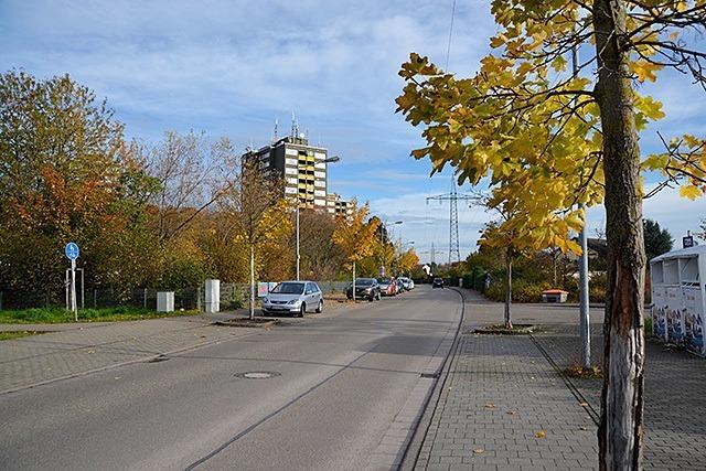 Bäume im Stadtgebiet leiden unter Folgen des Klimawandels