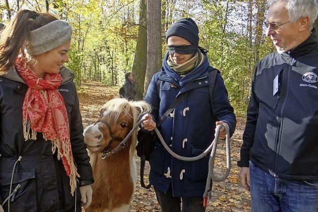Sich blind vom Pony durch den Park führen lassen