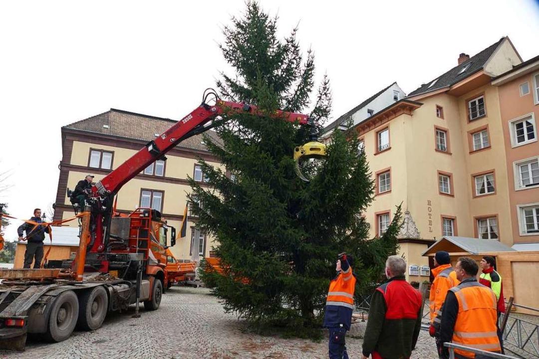 Der Weihnachtsbaum in Bad Säckingen wurde am Freitagvormittag aufgestellt.  | Foto: Hrvoje Miloslavic