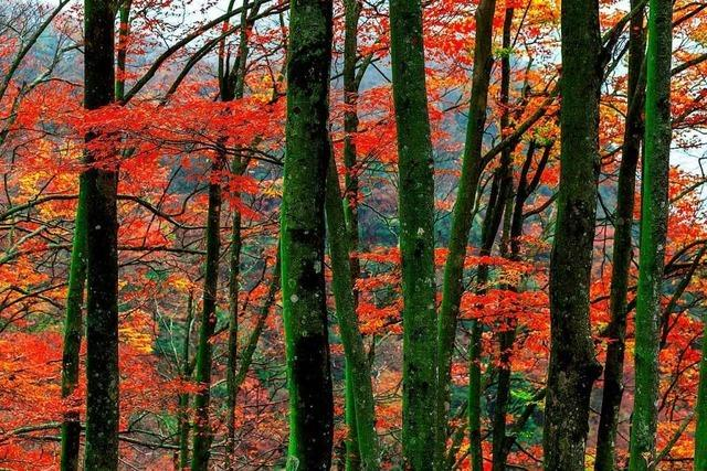 Defizite für Wehrer Wald