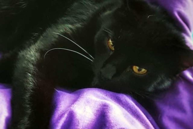 Das ist Romeo – der schwarze Kater, den am Titisee jeder kennt