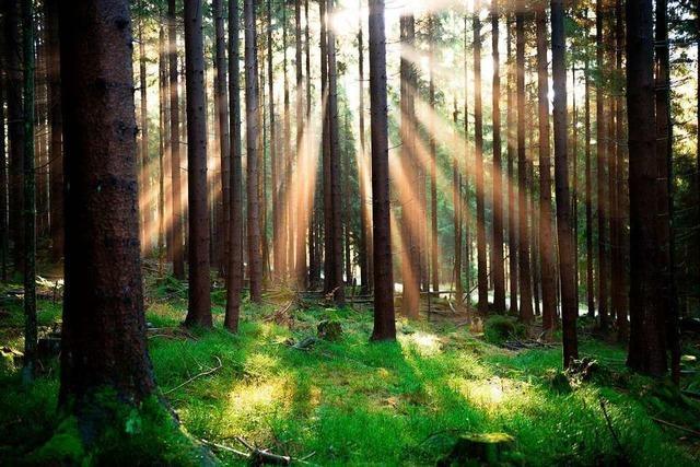 Dem Gundelfinger Wald geht es vergleichsweise gut