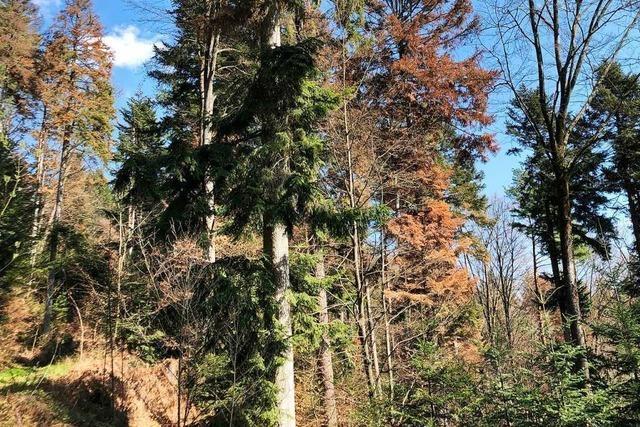 Waldbesitzer erhalten Aufarbeitungszuschuss bei Käfer- und Dürreschäden