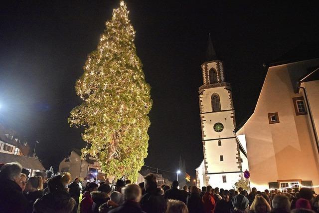 13000 Lichter brennen am Eichsler Weihnachtsbaum
