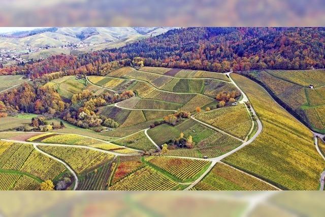 Land-Art der Winzer