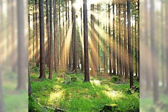 Waldaussichten sind finanziell wenig ersprießlich