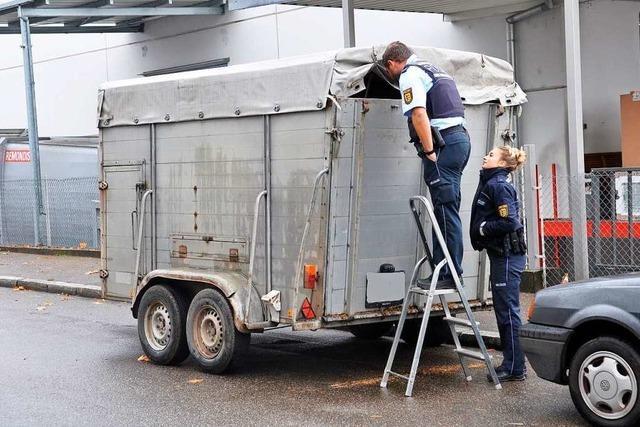 Schweine einen Tag in Anhänger vor Freiburger Schlachthof eingesperrt