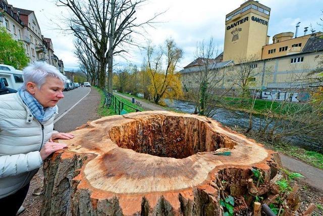 Stadt Freiburg will mit Ortsterminen um Verständnis bei Baumfällungen werben