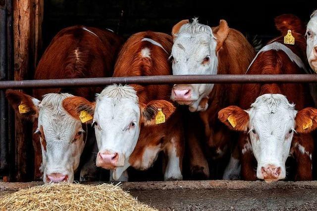 Agrarexperte fordert höhere Preise für Lebensmittel