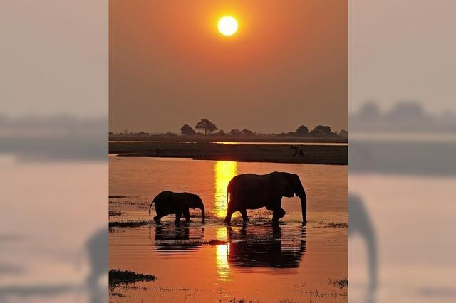 Diashow über Namibia und Botswana von Thomas Sbampato in Grenzach-Wyhlen