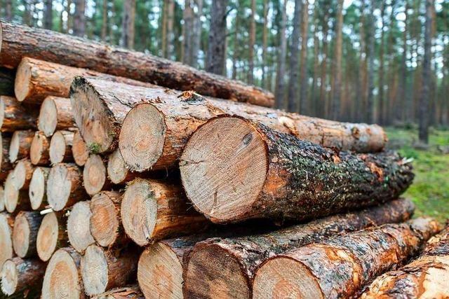 Die Bewirtschaftung des Glottertäler Walds wird teurer