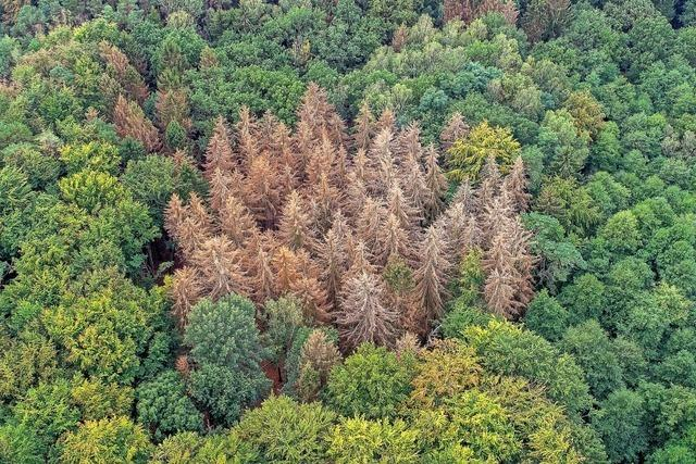 Experten empfehlen breiten Baum-Mix im Wald