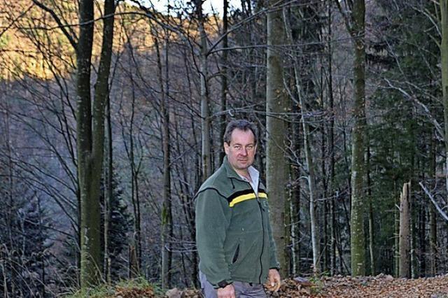 Schadholz belastet Markt