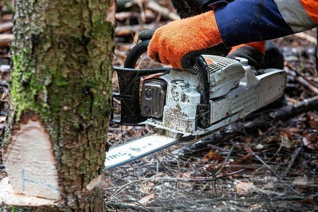 Stadt fällt am Samstag zehn Bäume an der Waldkircherstraße