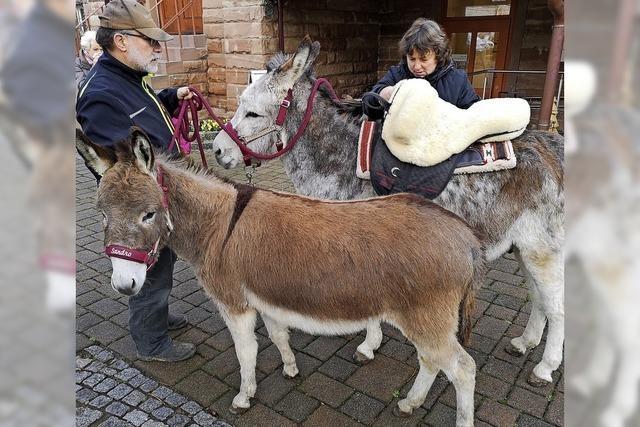 Adventsweg mit Eseln und Ziege